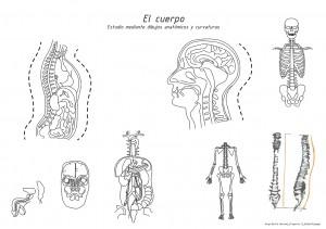 El cuerpo (2)