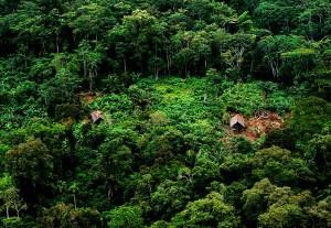 04-Selva-del-Amazonas