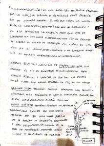 Nuevo doc 2017-10-11 18.42.41_4
