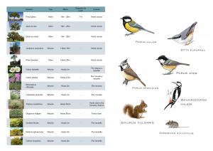 entrega 8 fauna flora